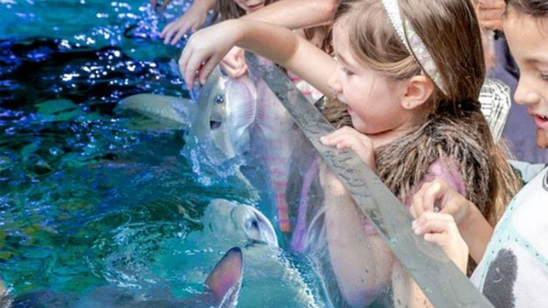 SeaQuest Aquarium Fort Worth: Coupons, Prices, Hours, & More