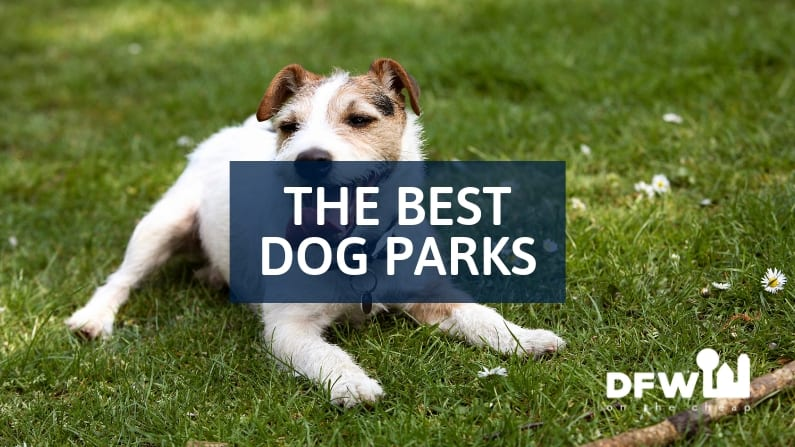 The Best Dog Parks in Dallas-Fort Worth