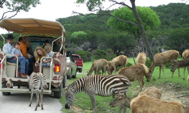 Fossil Rim Wildlife Center: Coupons, Prices, Hours, & More