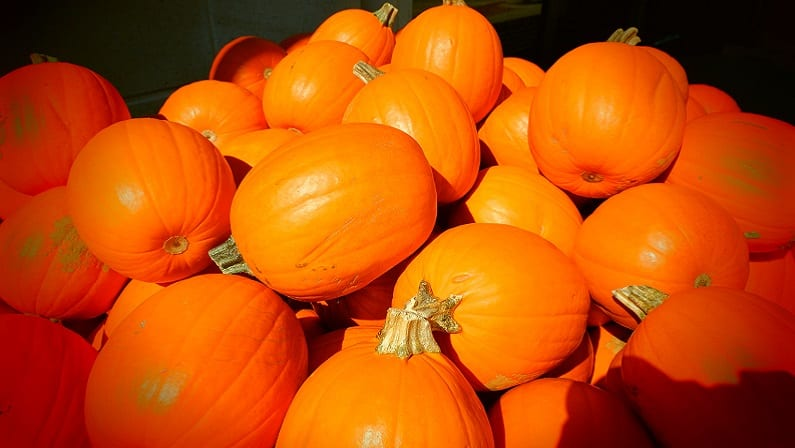 The Ultimate Guide to Pumpkin Patches in Dallas-Fort Worth