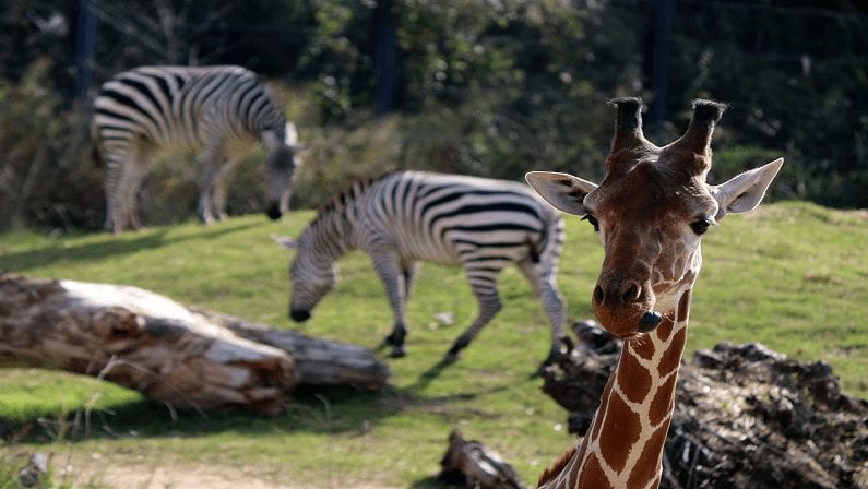 Dallas Zoo: Coupons, Prices, Hours, and More
