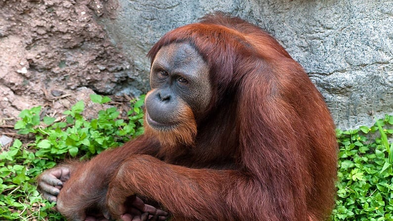 Fort Worth Zoo: Discount Tickets, Prices, Hours, and More