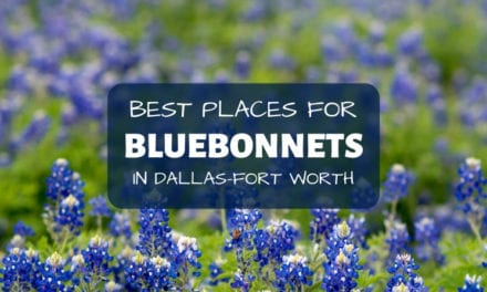 Best Places to See Bluebonnets in Dallas Fort Worth – 2021