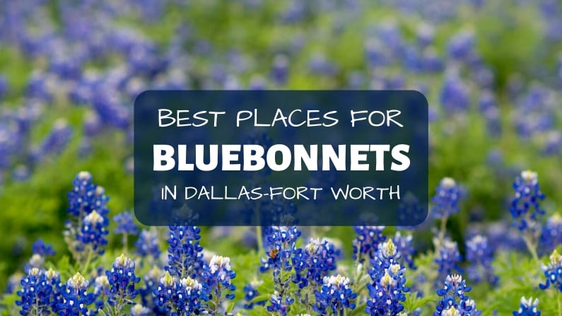 The Best Places to Find Bluebonnets in Dallas-Fort Worth