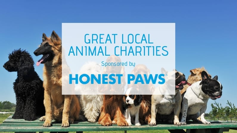 5 Great Pet Charities in Dallas-Fort Worth
