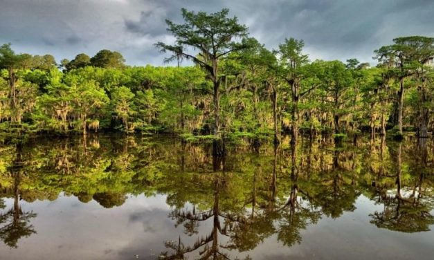 Caddo Lake State Park Near Dallas – Ranked Among Best In The US